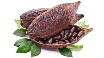 FlavorAtlas_BlogSupport_Cacao@2x